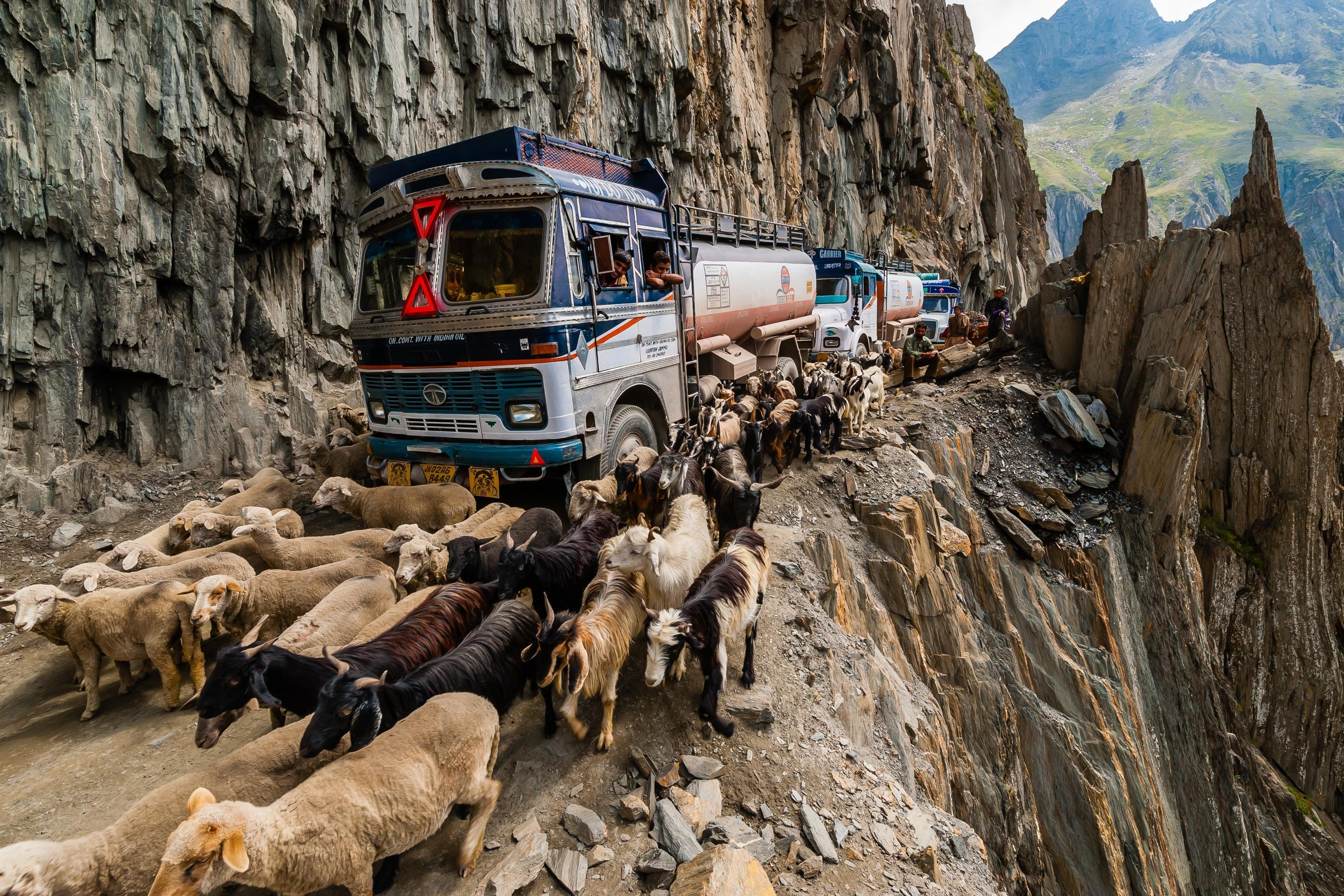 you've got to avoid cliffs – and livestock